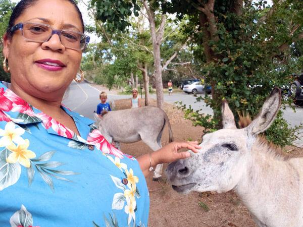 Kids Petting Donkeys